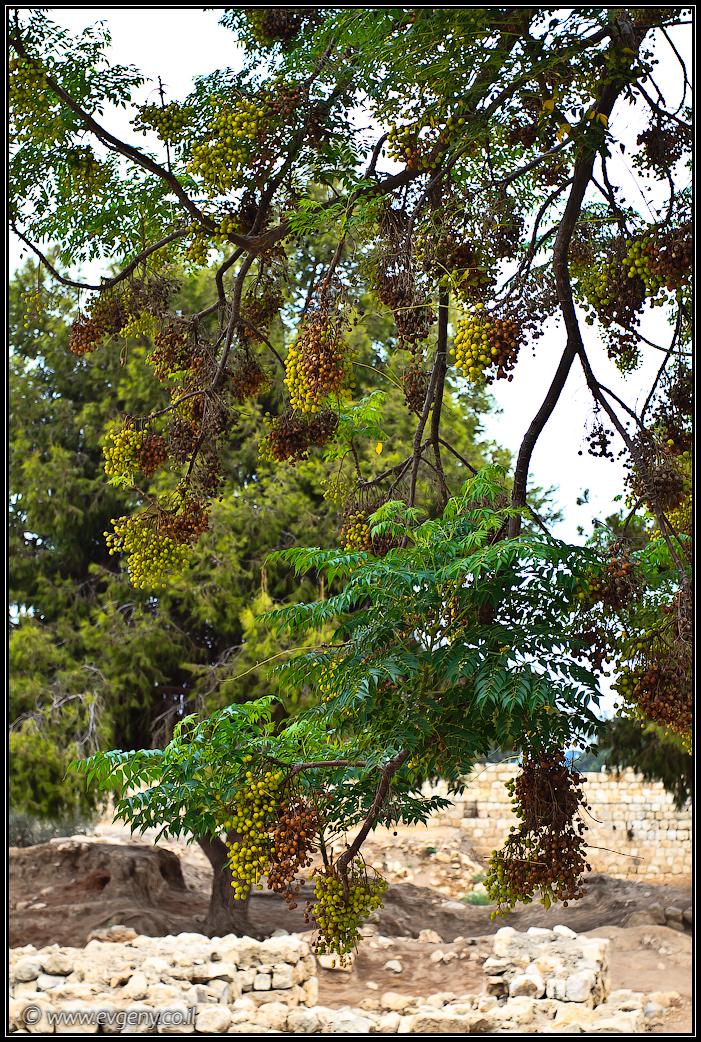 Парк Тель Афек   Park Tel Afek   תל אפק   LookAtIsrael.com - Фото путешествия по Израилю