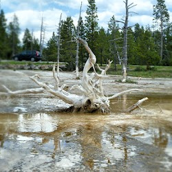 Master-Sirio-Ji-USA-2015-spiritual-meditation-retreat-5-Yellowstone-Park-26.jpg