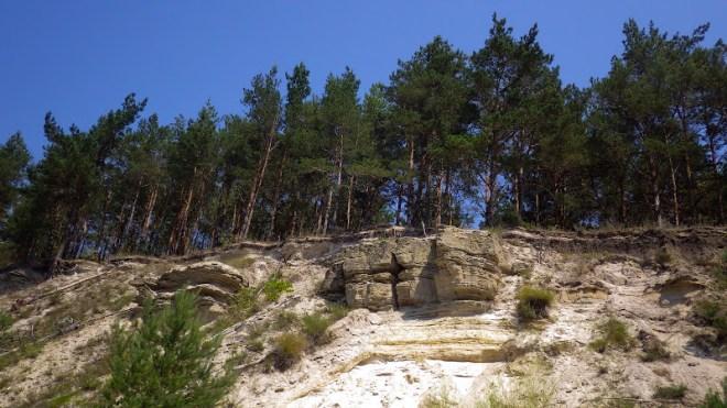 сосни на піщаній скелі