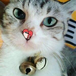 Kucing, Sahabat imut Yang Terpelihara