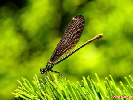Ngắm hình ảnh chuồn chuồn đẹp mắt dễ thương gắn liền với kỉ niệm tuổi thơ đáng yêu trong sáng