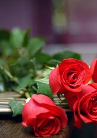 Hình ảnh hoa hồng tình yêu cực đẹp dành cho bạn gái