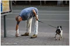 Как правильно выгуливать собаку.