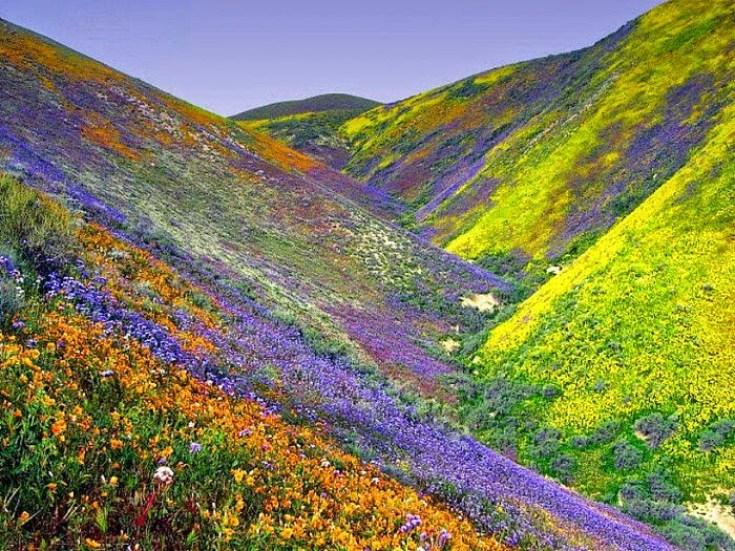 Долина цветов в Индии