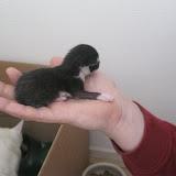 katten - 2011-02-26%2B12-09-45%2B-%2BIMG_0254.JPG