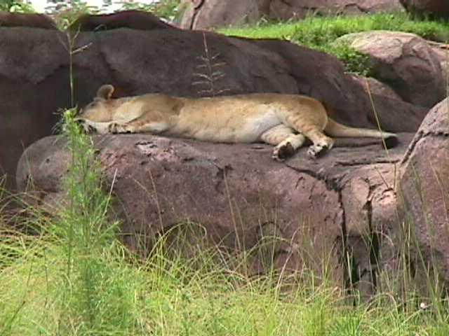 0450African Safari