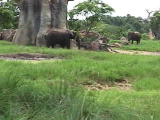 0350African Safari
