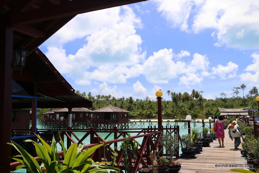 Barisan pohon kelapa di belakang resort