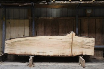 "601  Ambrosia Maple - 2 8/4x 34"" x 21"" Wide x  10'  Long"