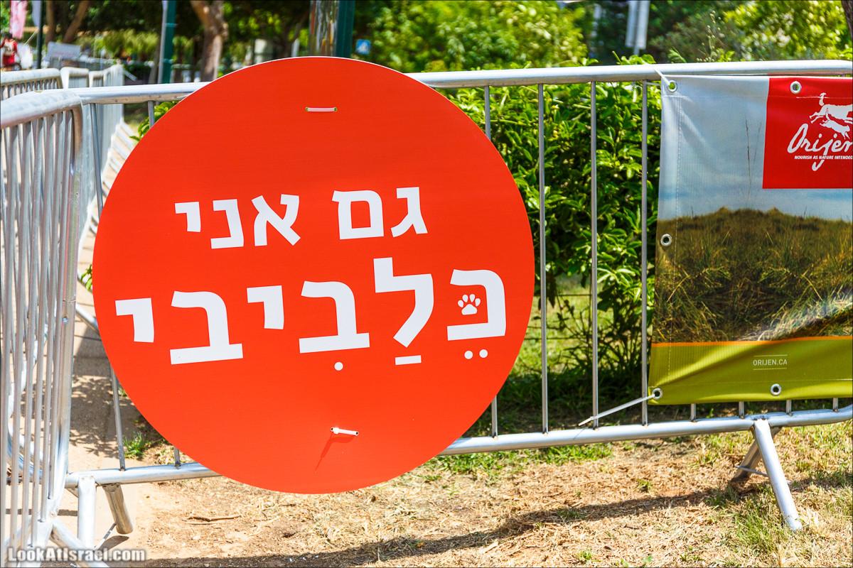 День собак в Тель-Авиве - Клавив   Klaviv - Dogs day in Tel-Aviv   כלביב - יום של כלבים בצל אביב   LookAtIsrael.com - Фото путешествия по Израилю