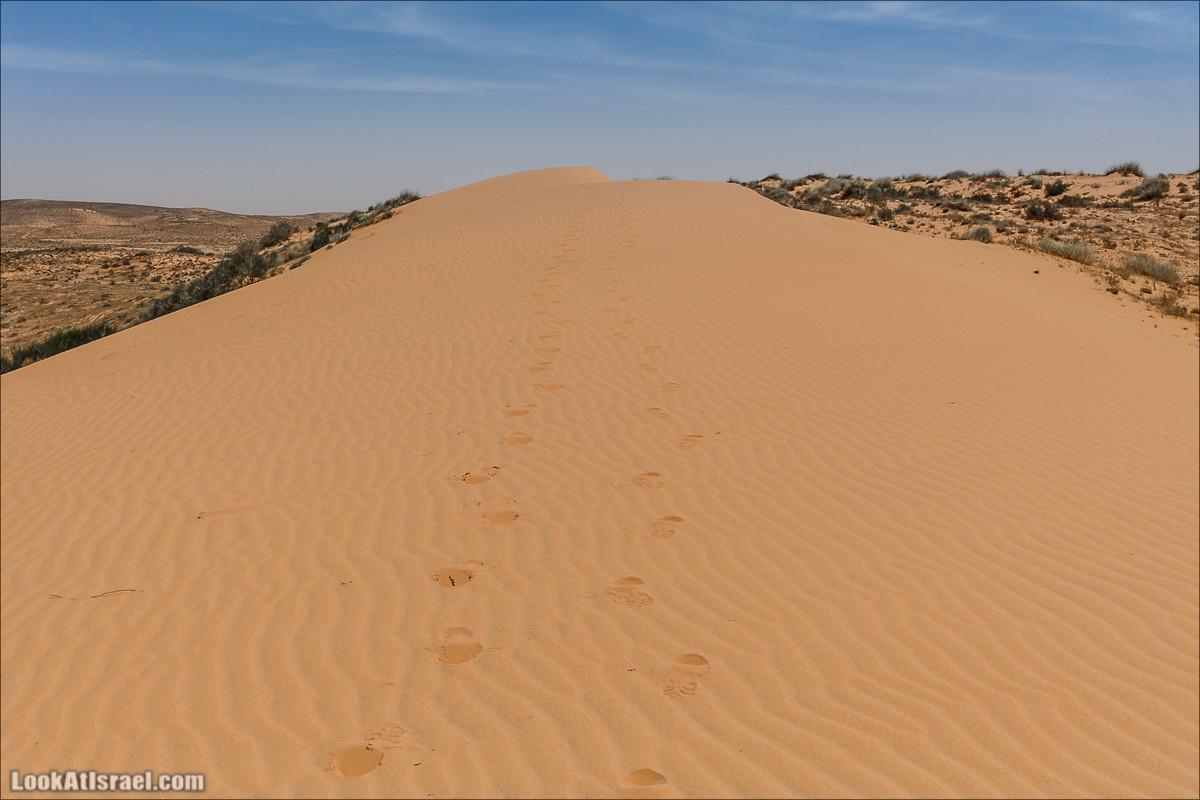 Пасхальные прогулки по пустыне