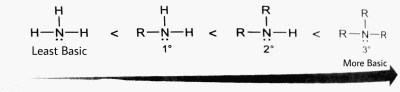 structural relationship of basicity of amines