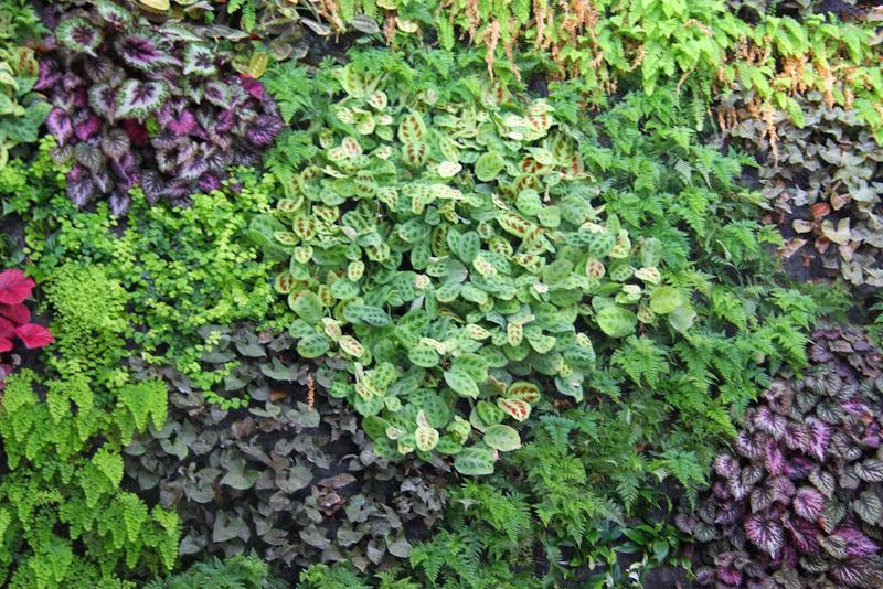 Muro verde de interior