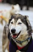 Iditarod2015_0129.JPG