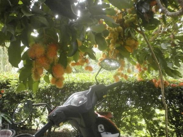 Mewarnai Gambar Pohon Cemara Untuk Anak Vtwctr