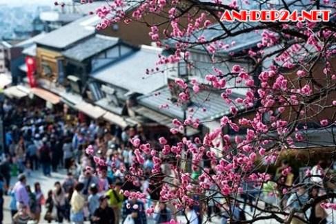 Vẻ đẹp lễ hội Hoa Anh Đào ở Nhật Bản