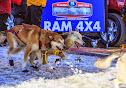Iditarod2015_0366.JPG