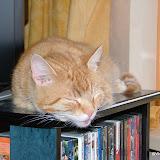 katten - DSCF2028.JPG