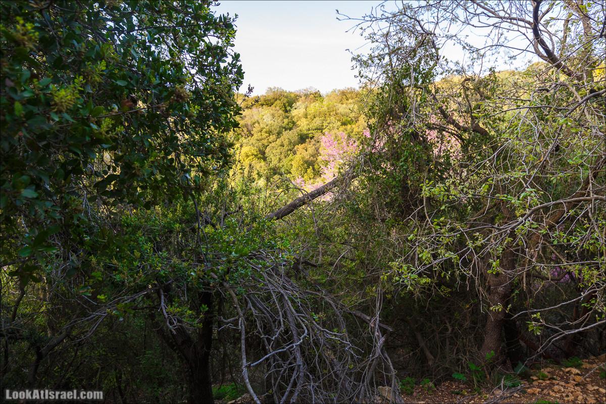 Циммер Баит Амитай (Амити) в посёлке Матат | Zimmer Bait Amitai (Amiti) at Matat | צימר בית אמיתי במתת | LookAtIsrael.com - Фото путешествия по Израилю