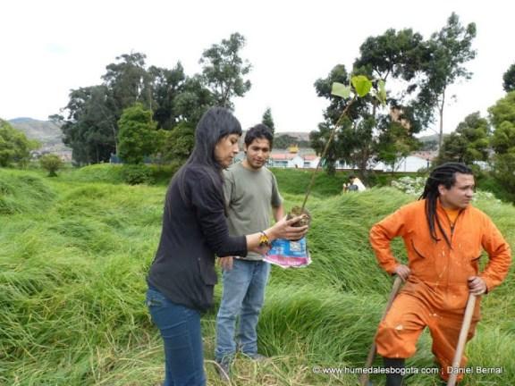 Plantando árboles en la Libélula