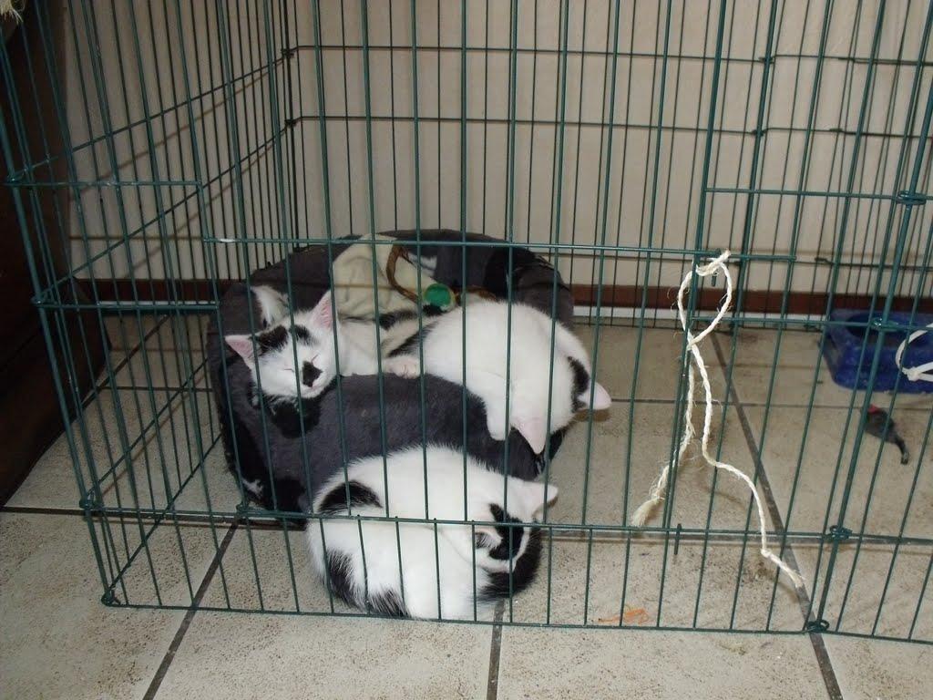 katten - 2010-06-26%2B16-28-27%2B-%2BDSCF1310.JPG