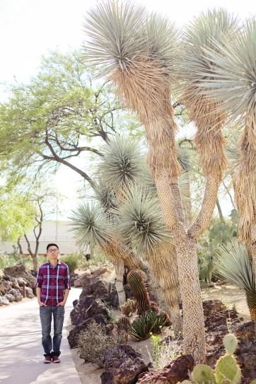 Ethel M Botanical Cactus Garden (25 Best Free Things to Do in Las Vegas).