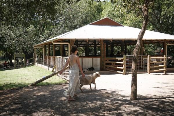 Lone Pine Sanctuary sheep