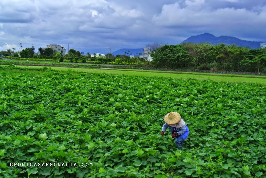 Viajar a Taiwán por sus paisajes y gente