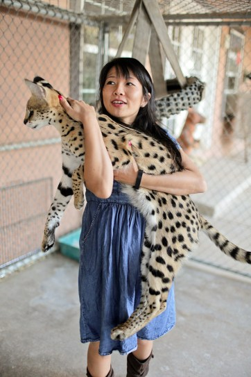 African Serval Cat // Mobile Petting Zoo.