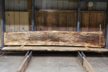 """611 Maple Spalted - 6 10/4x 21"""" x 16"""" Wide x  12'  Long"""