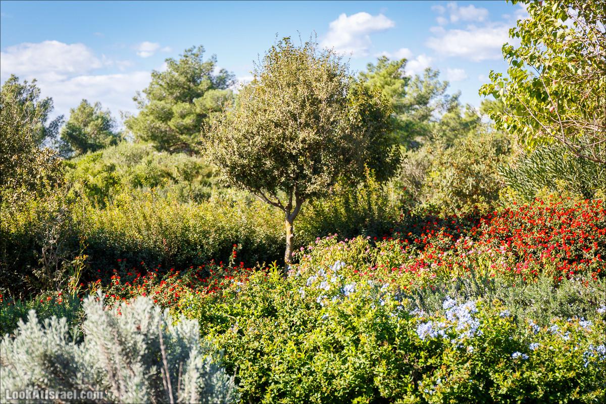 Туристические тропы Рамат ха-Надив | Hiking around Ramat ha-Nadiv | LookAtIsrael.com - Фото путешествия по Израилю