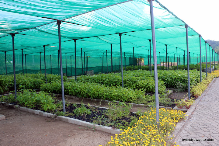 Bibit tanaman di Community Development Center yang akan diberikan gratis pada masyarakat