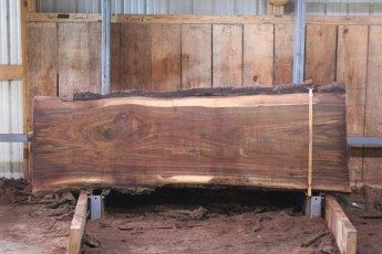 "552  Walnut -2 10/4 x  33"" x  28"" Wide x 8'  Long"