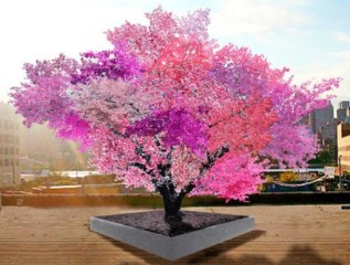 mixed fruit color tree