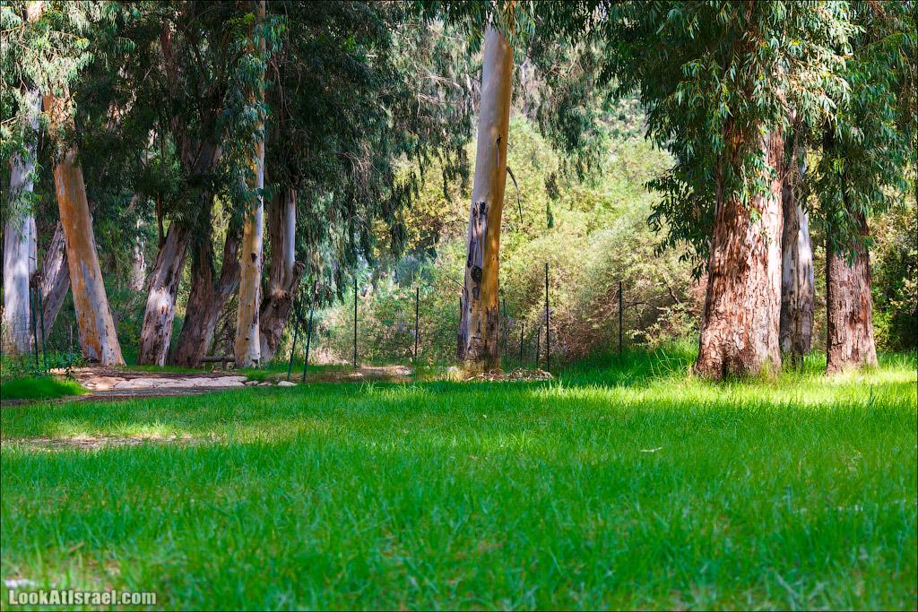 Парк Мекорот ха-Яркон и Тель Афек | Parks The Yarkon springs & Tel Afek | מקורות הירקון ותל אפק | LookAtIsrael.com - Фото путешествия по Израилю