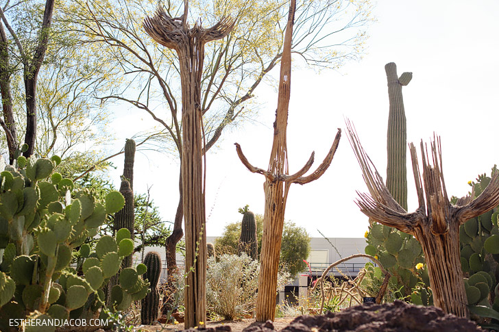 Saguaro Skeleton at the Ethel M Chocolate Factory and Botanical Cactus Gardens.