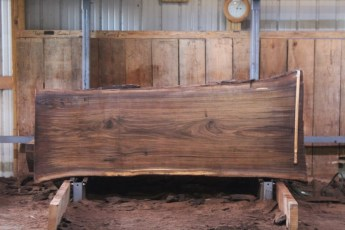 "552  Walnut -4 10/4 x  40"" x  33"" Wide x 8'  Long"