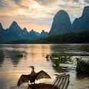 Advanced 2nd-Li River Cormorant_Sarah Walker.jpg