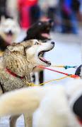 Iditarod2015_0146.JPG