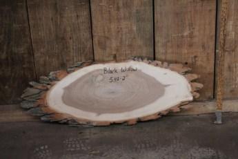 """542 Black Willow -2  1""""x 35"""" Max Dia  x 13"""" Min Dia"""