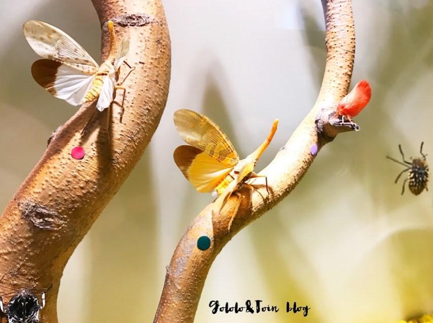 insectpark-ocio-familia-museo-insectos-centro-naturaleza-fantasía