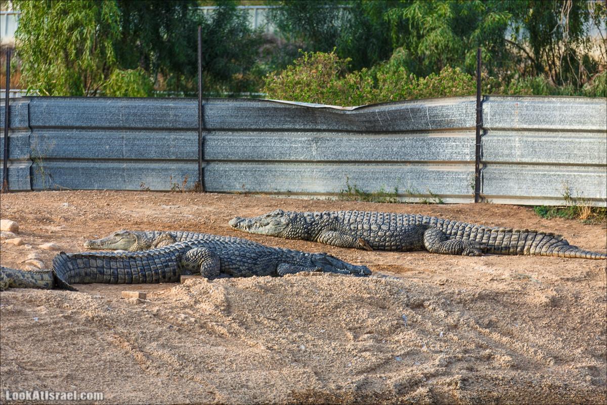 Заброшенная крокодилья ферма в Израиле | LookAtIsrael.com - Фото путешествия по Израилю