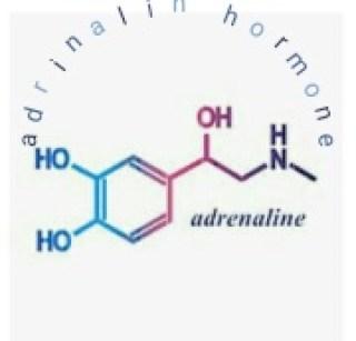 adrenaline hormones