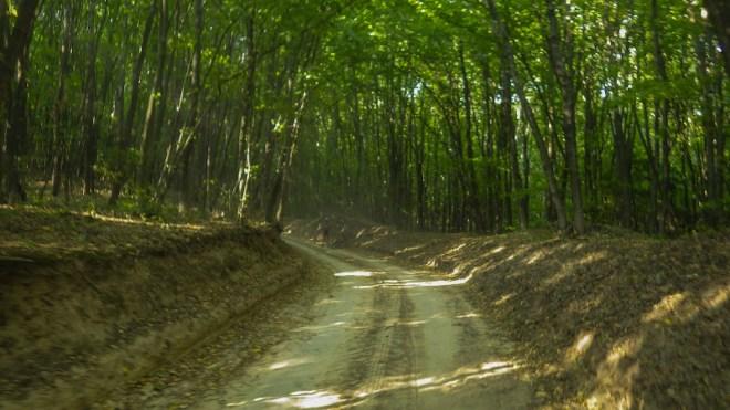 Дорога через лісок
