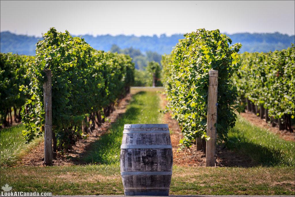 Ледяное вино Канады | LookAtIsrael.com - Фотографии Израиля и не только...
