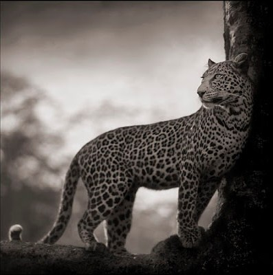 knitGrandeur: Animal Magnetism