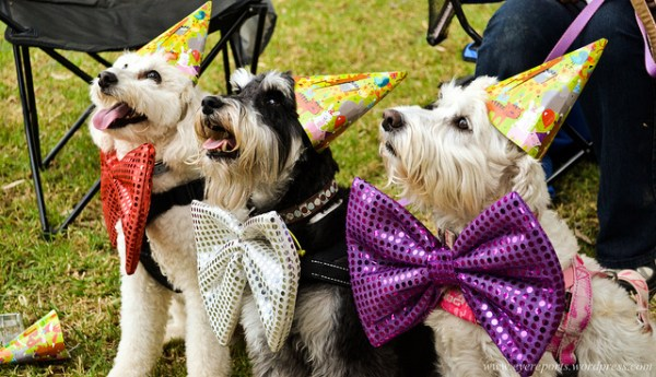 Dog Themed Party Birthday Party