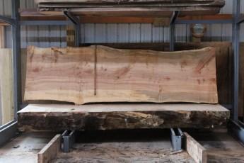 "564  Hard Maple Curly Burly -6 10/4x 42"" x 36"" Wide x  11'  Long"