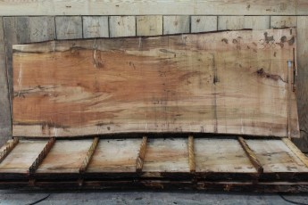 "388 Ambrosia Maple - 6 2 1/2"" x 48"" x 41"" Wide x 10' Long"