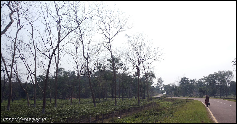 The highway through a Tea-garden - Silchar